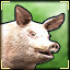 Oink!