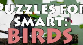 puzzles for smart  birds steam achievements