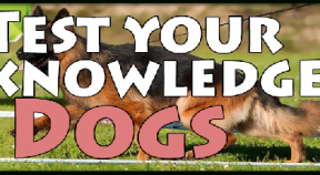 test your knowledge  dogs steam achievements